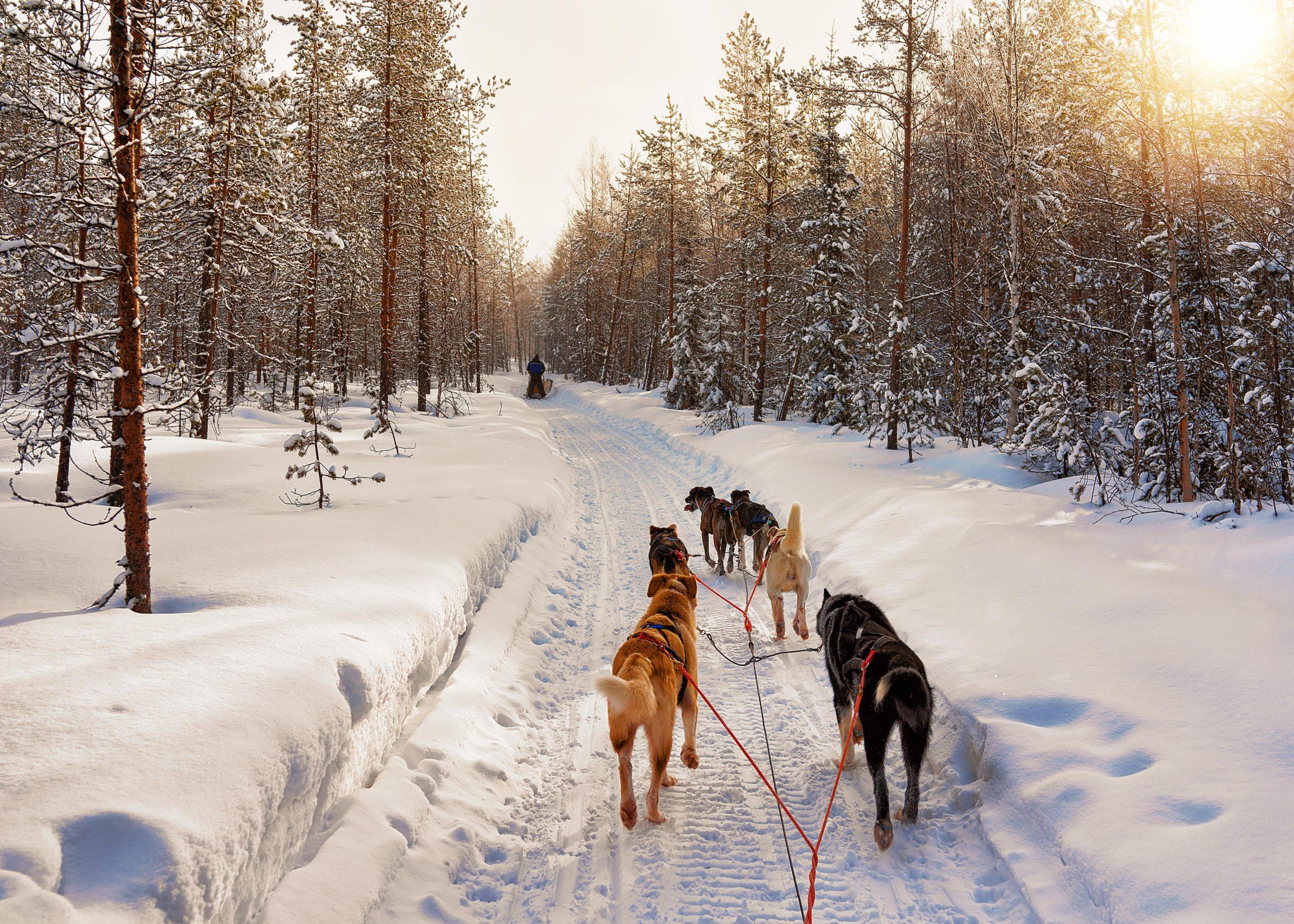 Tour di gruppo organizzato in Lapponia a vedere l'aurora boreale e rovaniemi